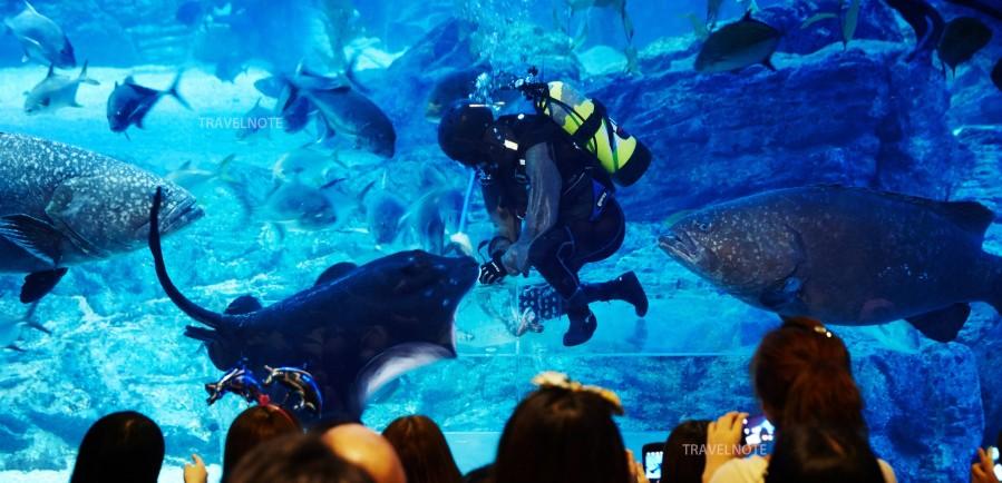 壁纸 海底 海底世界 海洋馆 水族馆 899_434